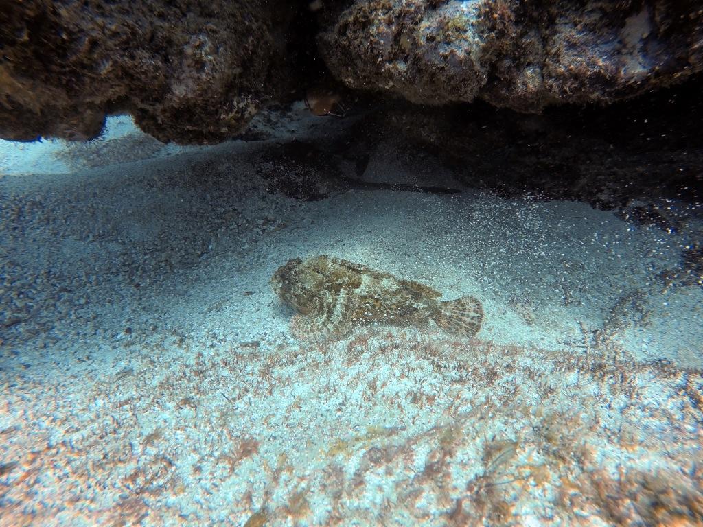 Rock fish and stingray